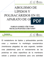 Grupo 11 Metabolismo de Lipidos y Polisacaridos en El Aparato de Golgi
