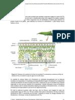 Fotosíntesis Lectura 1 (forestal)