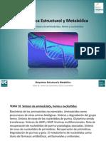 Tema 18. Sintesis de Amino, Hemo y Nuecleotidos