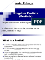 protists introduction notes 2