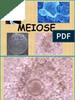 MeiosePioX