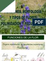 PresentaciónFlores1