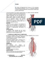 MUSCULOS INVEST (1).docx