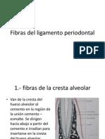 Fibras del ligamento periodontal.pptx