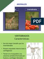 54279450 Ppt Animales Vertebrados e Invertebrados