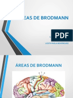 Areas-de-Brodmann.ppt