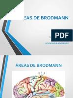 Areas-de-Brodmann.ppt