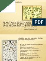 Plantas Medicinales Pausa Aludable 3 Junio 2013