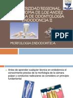 mooooorfologia endodontica