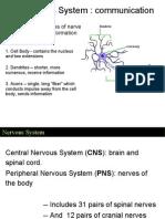 Ch 09 Nervous System (a)
