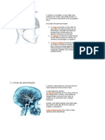 Viagem ao Cérebro