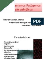 Vibrio Vulnificus 2