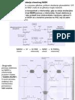 Oksidacija Citoslonog NADH.