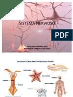 Sist Nervioso (2)
