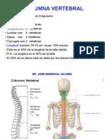 Columna Vertebral - Dr.Sandoval