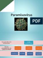 Paramixovirus Completo