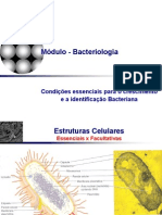 Meios de Cultivo Para Bacterias