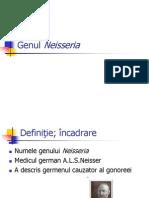 Genul+Neisseria