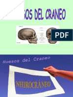 Huesos Del Craneo