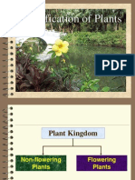 Classification of plants.ppt