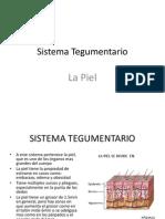 Anatomia La Piel
