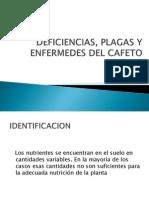 Diapositivas de Deficiencias, Plagas y Enfermedes Del Cafeto