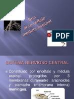 Arco Reflejo y Medula Espinal