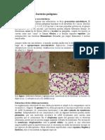 Estructura de Las Baacterias Patogenas
