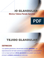 3-4.Tejido Glandular.version2004.ppt