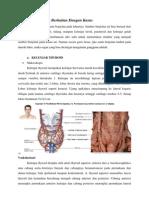 Anatomi Leher Iman