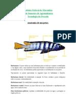 Anatomia de Um Peixe