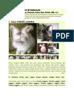Jenis kelinci di Indonesia.docx
