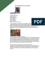 Indian Almond Leaf Usage.pdf