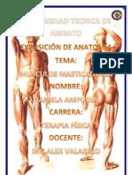 100460373 Musculos de La Cabeza
