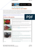 WHAT TYPES OF BETTAS ARE THERE.pdf