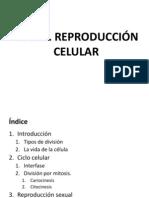 UD 12 REproduccion Celular