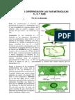 Fotosintesis C3,C4 y CAM