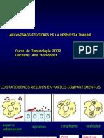 11_mecanismos efectores