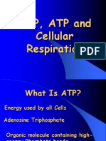 Cellular Respiration ABRIDGED