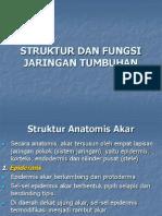 Bab 2 Struktur Dan Fungsi Jaringan Tumbuhan-3