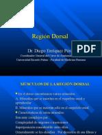 Región Dorsal - Dr. Enriquez