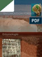 entomologa-forense