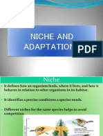 Niche and Adaptations