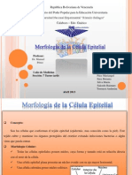 diapositiva histologia