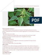 4 plantes sauvages comestibles.docx