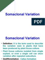 SomaClonal Variation
