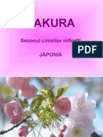 Sakura Season in Japan