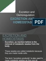 Excretion Andosmoregulationppt09 10