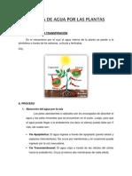 Informe Perdida de Agua Por Las Plantas