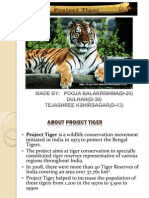 Tiger Project.ppt